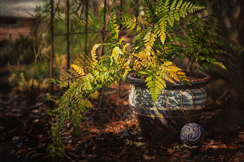 A Portrait of Boston Fern