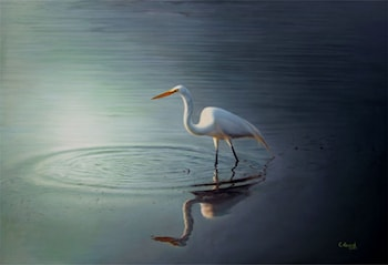 Shadows of Egret by Anand PKC