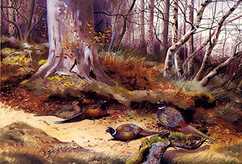 Pheasants In A Wood by Philip Rickman