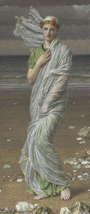 Seashells by Albert Joseph Moore
