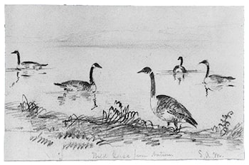 Wild Geese (from McGuire Scrapbook) by Shepard Alonzo Mount